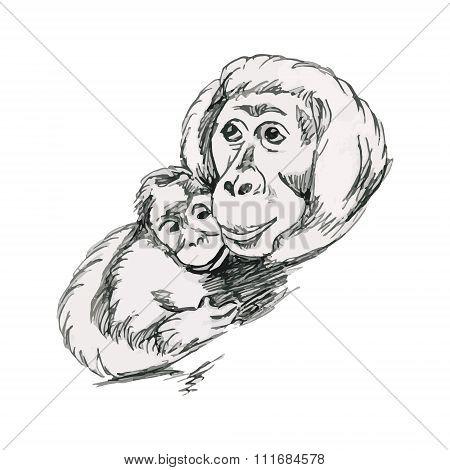Orangutans, Monkeys - Mother And Cub