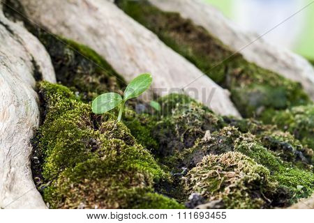 Sapling In The Green Moss