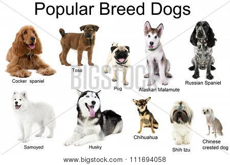 Different breeds of dogs together, isolated on white