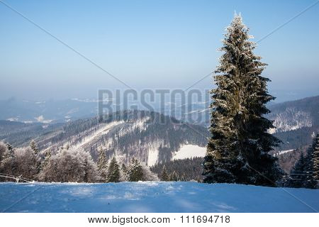 Christmas forest in the snow. Start steep ski slope on a hill