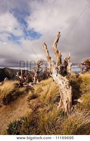 Alpine Stump