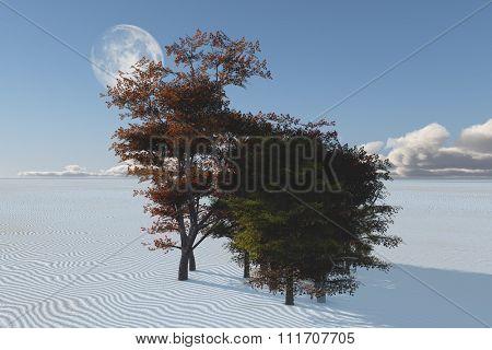 Inexplicable trees in desert