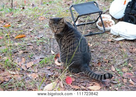 The Fatty Stray Cat In A Park, Japan