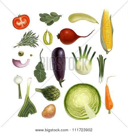 Hand drawn vegetables, isolated on white background: tomato, spinach, vegetable marrow, corn, rosemary, peas, beet, olive, artichoke, eggplant, salad, fennel, onion, leek, potato, carrot, cabbage