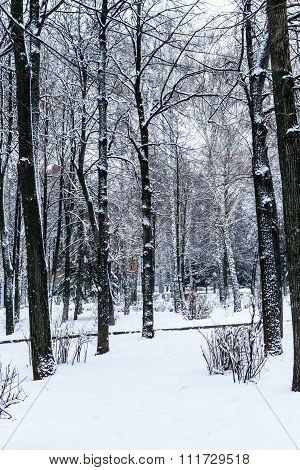 Winter Trees In A Forest Covered In Snow