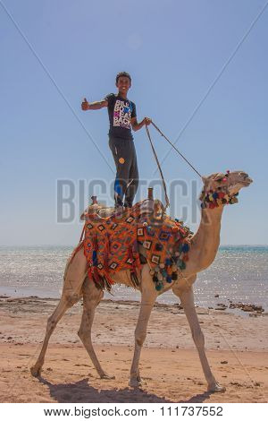 Arabic boy stands on a camel.