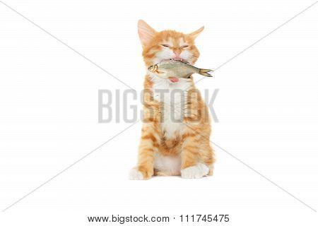 Kitten Caught Fish