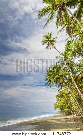 Tropical Palm Fringed Beach