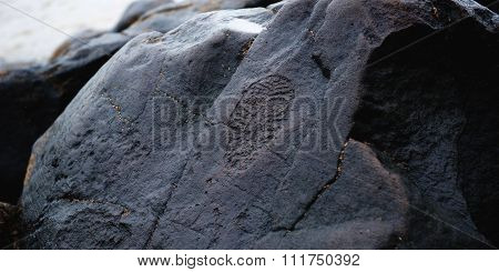 Ancient Petroglyphs Found On Shore Of Amur River