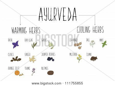 Hand-sketched Collection Of Elements Of Ayurvedic Spices In Our Kitchen. Warming And Cooling Herbs A