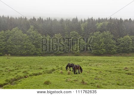 Horses On A Green Meadow
