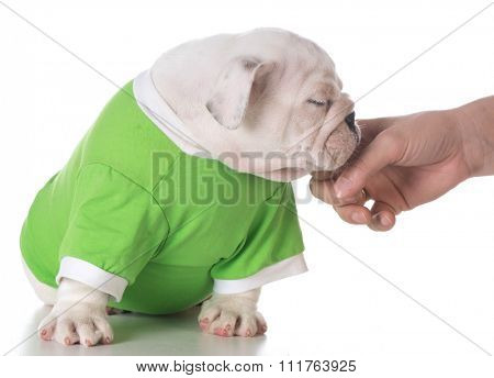 hand reaching out to pet puppy on white background
