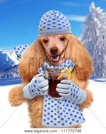 Dog holding in the paws of mulled wine.