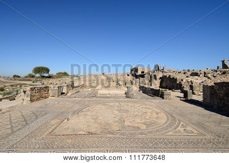 Ruins Of The Roman Volubilis City In Morocco