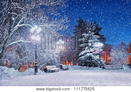 The Winter Evening In The Park. City Landscape