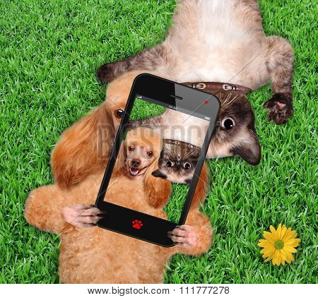 Cat and dog taking a selfie.