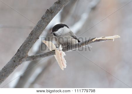 Little Bird Sitting On A Branch