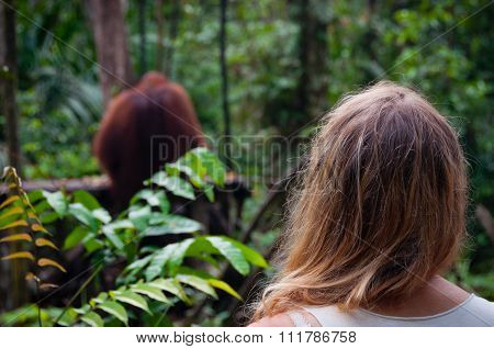Woman from back watching Orangutan