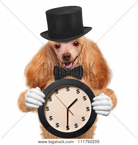 Beautiful red dog clock.