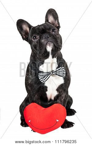 Dog Breed French Bulldog And Heart