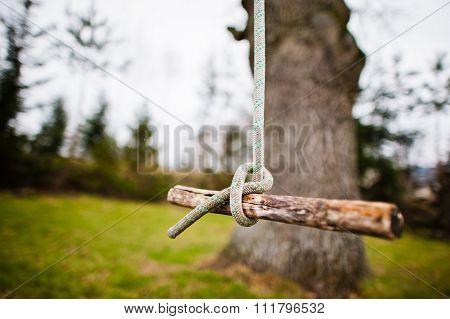 Bungee Swing On A Tree