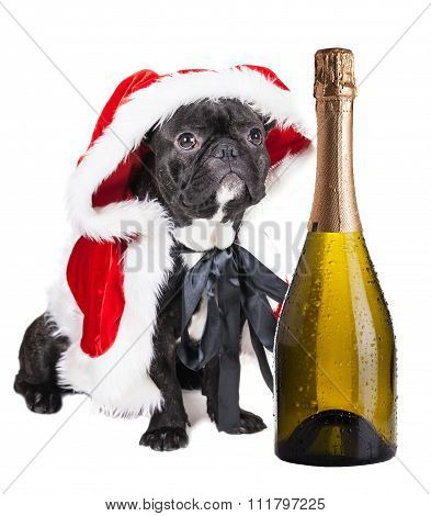 French Bulldog With Champagne