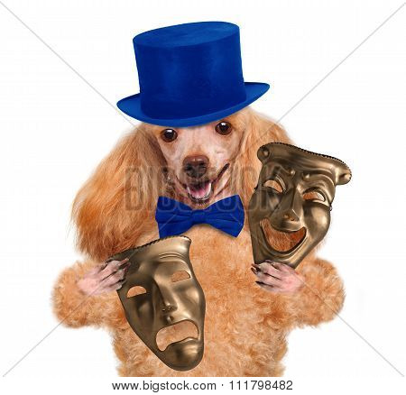 Dog with theatrical masks.