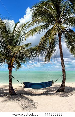 Hammock, Palm Trees and the Sea