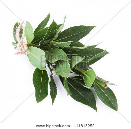 Fresh twigs with bay leaves, isolated on white