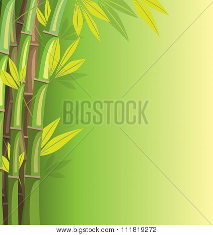 Green bamboo on green background