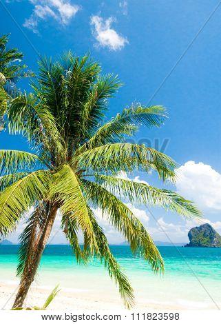 Green Getaway Coconut Coast