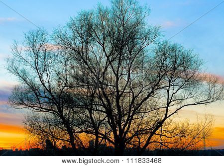 Silhouette Of A Big Old Tree On Beautiful Gold Sunset Background High Contrasted