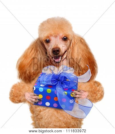 Dog with gift box