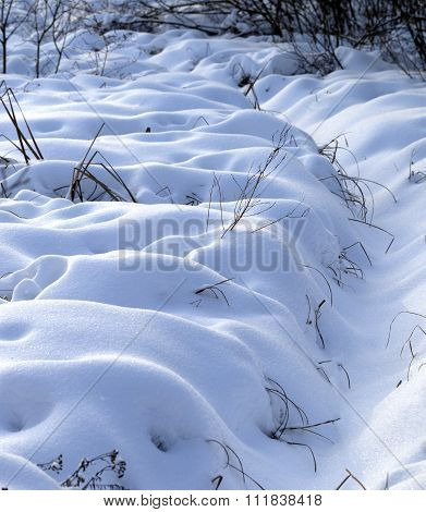 Snowbound Winter Meadow