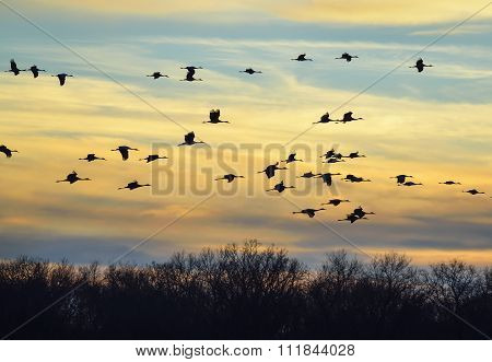 A Group Of Birds In Flight.