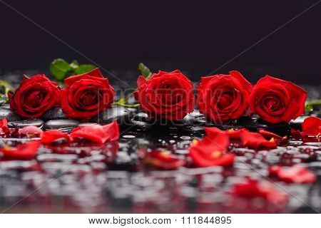 Still life with five red rose,petals and therapy stones