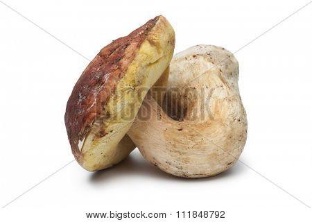 Single fresh porcini mushroom on white background