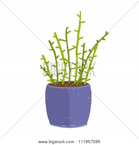Green indoor leafy plant with stems in blue pot