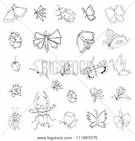 Collection Of Hand Drawing Insects
