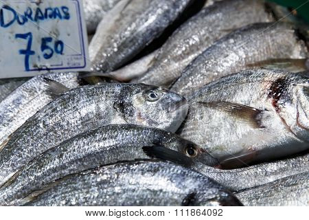 Dorada Fish At Market For Sale