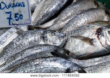 Dorada Fish At Market For Sale