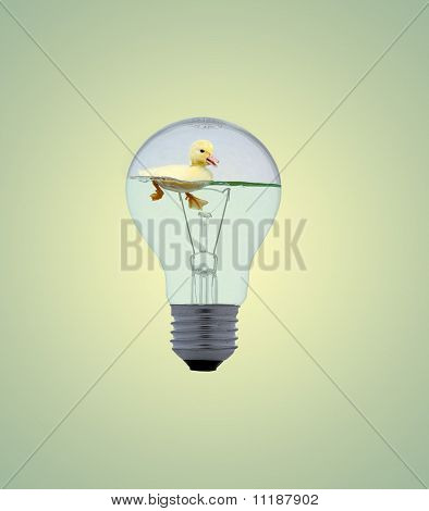 duckling in a light bulb