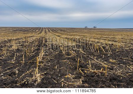 Agricultural landscape with harvested maize field in Ukraine