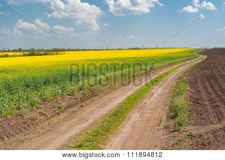 Spring landscape with flowering rape-seed field and earth road