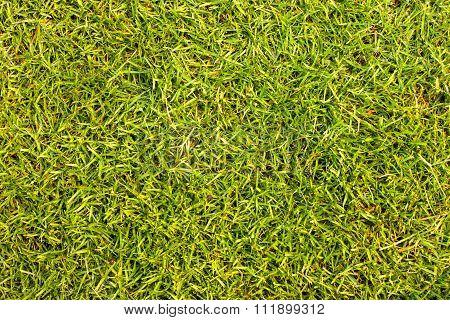 grass texture grass field Golf Courses