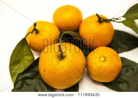 Fresh juicy tasty Sicilian tangerines with a foliage branch on a white background