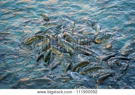 Fish Lake (balikli Gol), Sanliurfa.