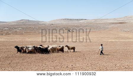 Young Boy With Goats