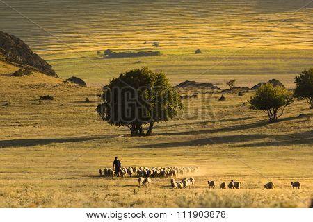 Beautiful sunshine landscape with shepherd and sheep - Macin Mountains,Dobrogea, Romania