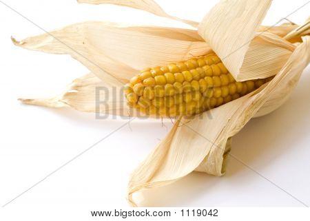 Corn Ear